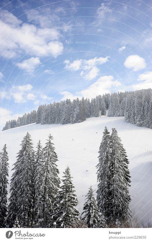Powder Umwelt Natur Landschaft Pflanze Himmel Wolken Sonnenlicht Winter Schönes Wetter Baum Wald Hügel Berge u. Gebirge Rigi blau schwarz weiß ruhig
