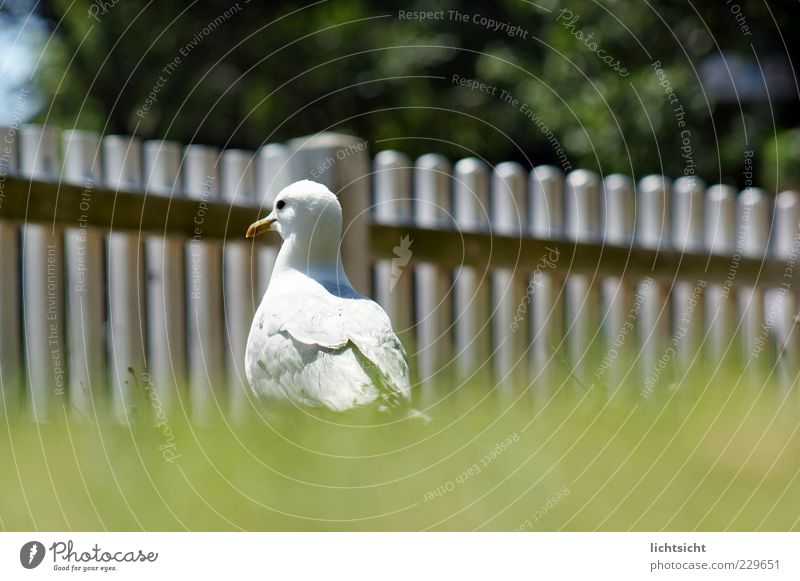 Möwengehege weiß grün Sommer Tier Wiese Gras Vogel Insel Feder Nordsee Schönes Wetter Zaun Ostsee Möwe Baumkrone frech