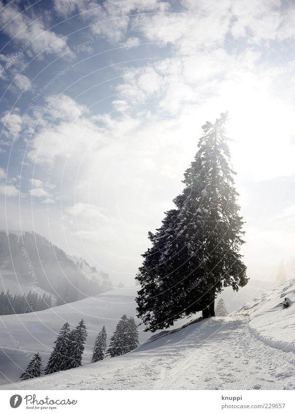 Oh Tannenbaum... Natur blau weiß Baum Pflanze Sonne Winter Wolken schwarz Ferne Wald Schnee Umwelt Landschaft Berge u. Gebirge Nebel