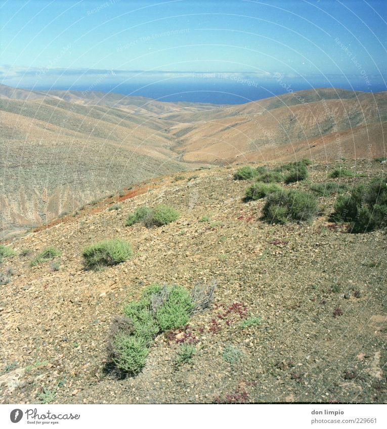 barranco de amanay Ferne Sommer Insel Berge u. Gebirge Umwelt Landschaft Erde Schönes Wetter Wärme Dürre Sträucher Hügel Fuerteventura Menschenleer dehydrieren