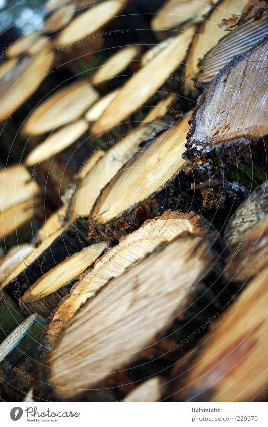 Holz Natur Umwelt braun Hintergrundbild Perspektive Kreis Baumstamm Stapel Furche Textfreiraum Scheibe Haufen Baumrinde Fichte Brennholz