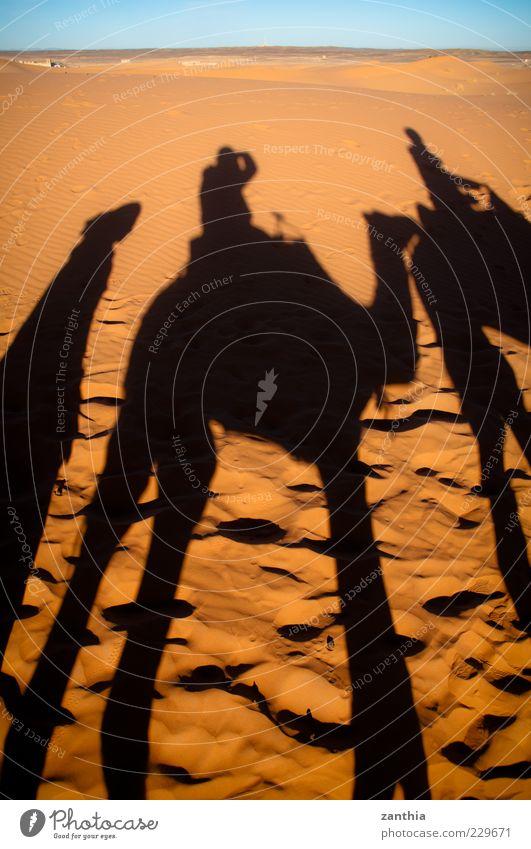 camel ride Ferien & Urlaub & Reisen schwarz Ferne Bewegung Sand Abenteuer Tourismus Kultur Wüste Mobilität exotisch Tradition Erfahrung Wolkenloser Himmel