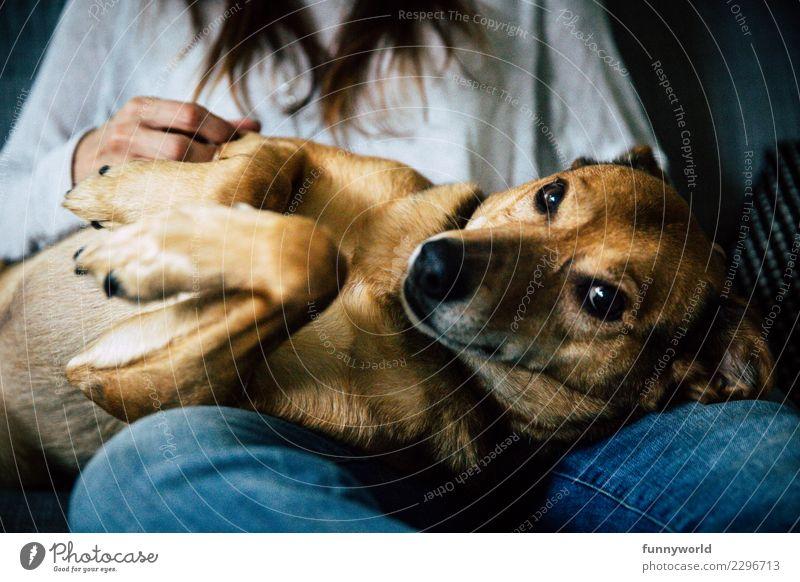 Kleines liebes Hündlein Tier Haustier Hund 1 liegen Blick frech kuschlig niedlich Zufriedenheit Lebensfreude Warmherzigkeit Sympathie Freundschaft Zusammensein