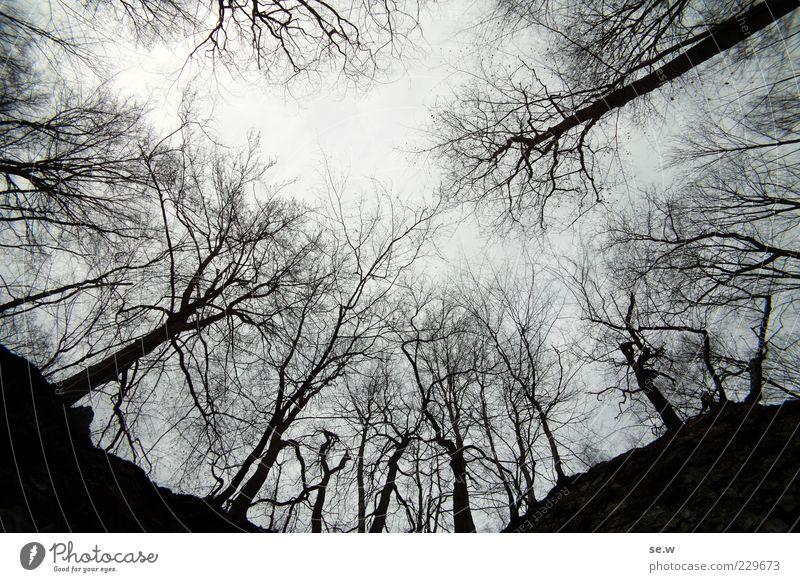 An der Kelle Himmel schlechtes Wetter Nebel Baum Wald Harz Erholung leuchten dunkel eckig grau schwarz ruhig Einsamkeit Traurigkeit Ferne Menschenleer Kontrast