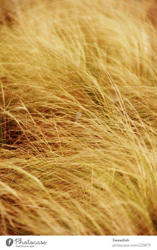 Let go. Natur Herbst Wiese Gras Bewegung Wind Sträucher Sehnsucht Halm Grünpflanze