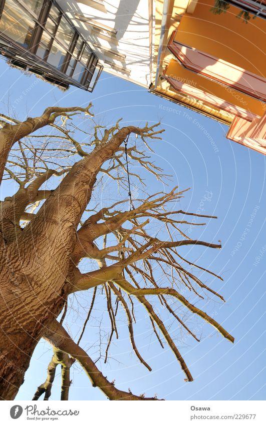 Abstand Himmel blau Baum Winter Haus Architektur Gebäude Traurigkeit Fassade hoch Ast Balkon Baumstamm Baumkrone kahl Blauer Himmel