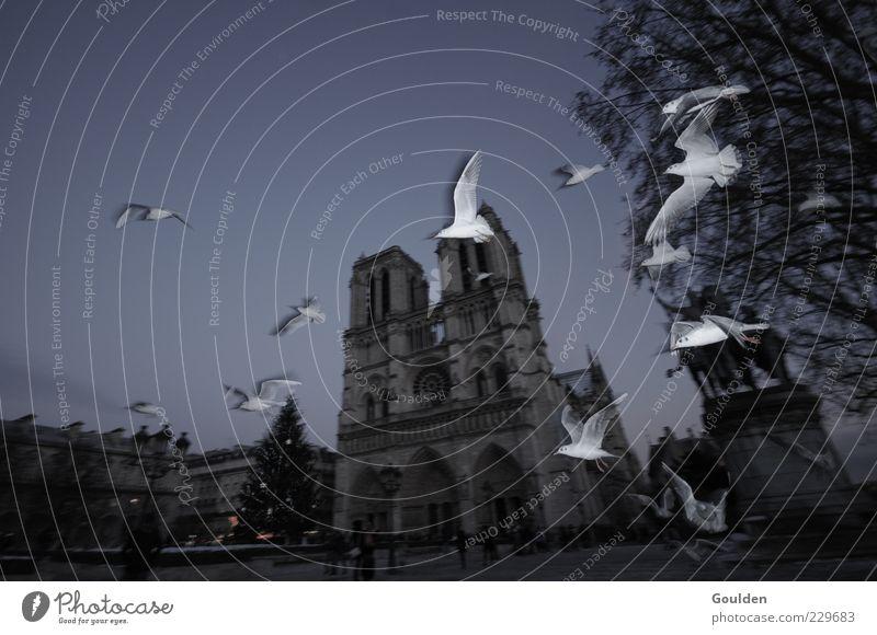 Schatz, Paris im Winter ist furchtbar Stadt Winter Tier dunkel Architektur Vogel fliegen Kirche Tiergruppe Flügel Bauwerk Paris historisch Wahrzeichen Möwe Stadtzentrum