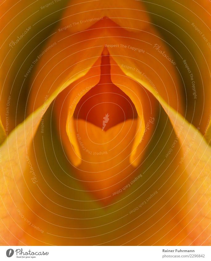 """eine symmetrische Blüte als erotisches Symbol Zeichen Liebe Erotik schön Wärme feminin wild Verliebtheit Romantik Begierde Lust Sex Glück Symmetrie """"Rose Orange"""