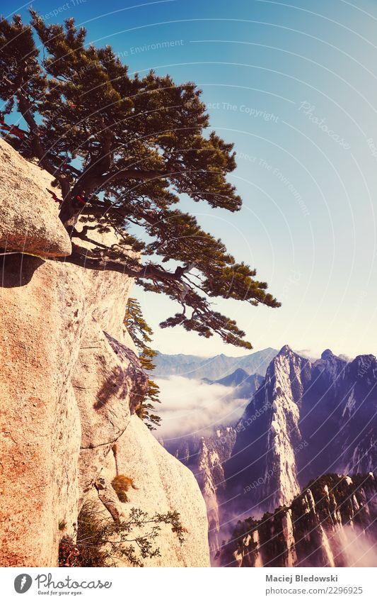 Huashan-Berglandschaft, China. Himmel Natur Ferien & Urlaub & Reisen schön Landschaft Baum Berge u. Gebirge Tourismus Freiheit Felsen Ausflug wandern Nebel