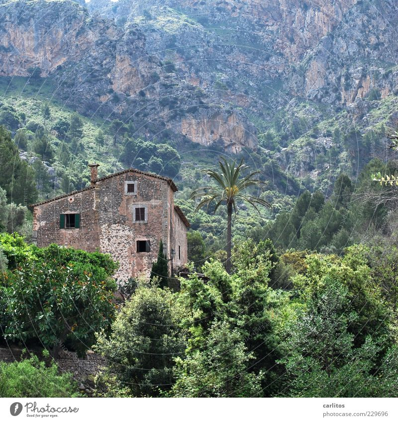 Es gibt auch nette Nachbarn ..... Natur Landschaft Pflanze Baum Sträucher Palme Felsen Berge u. Gebirge Haus Mauer Wand Fassade alt grün Sicherheit Schutz