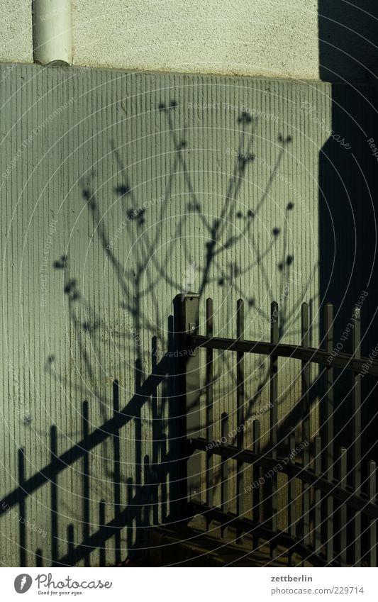 Frühling Häusliches Leben Haus Garten Pflanze Schönes Wetter Baum Sträucher Fassade Wachstum Vorgarten Zaun Schmiedeeisen Ast Zweig Farbfoto Gedeckte Farben