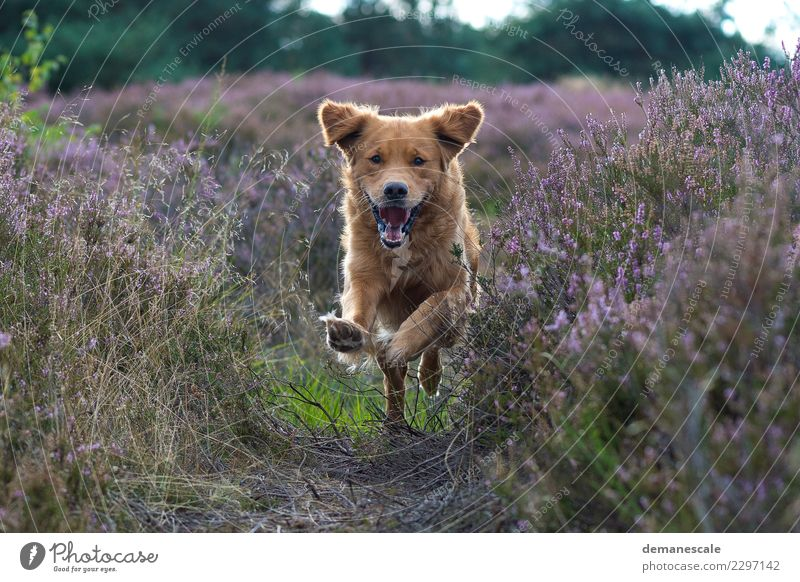Ungebremst Natur Hund Pflanze Sommer grün Landschaft Blume Tier Freude Umwelt Blüte Gras lachen springen Park Fröhlichkeit