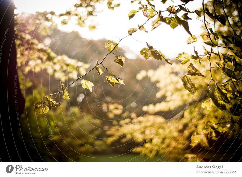 15 Uhr Kronentor 2010 Umwelt Natur Landschaft Pflanze Himmel Herbst Klima Schönes Wetter Baum Blatt Grünpflanze Zweig hell trocken Vergänglichkeit dehydrieren