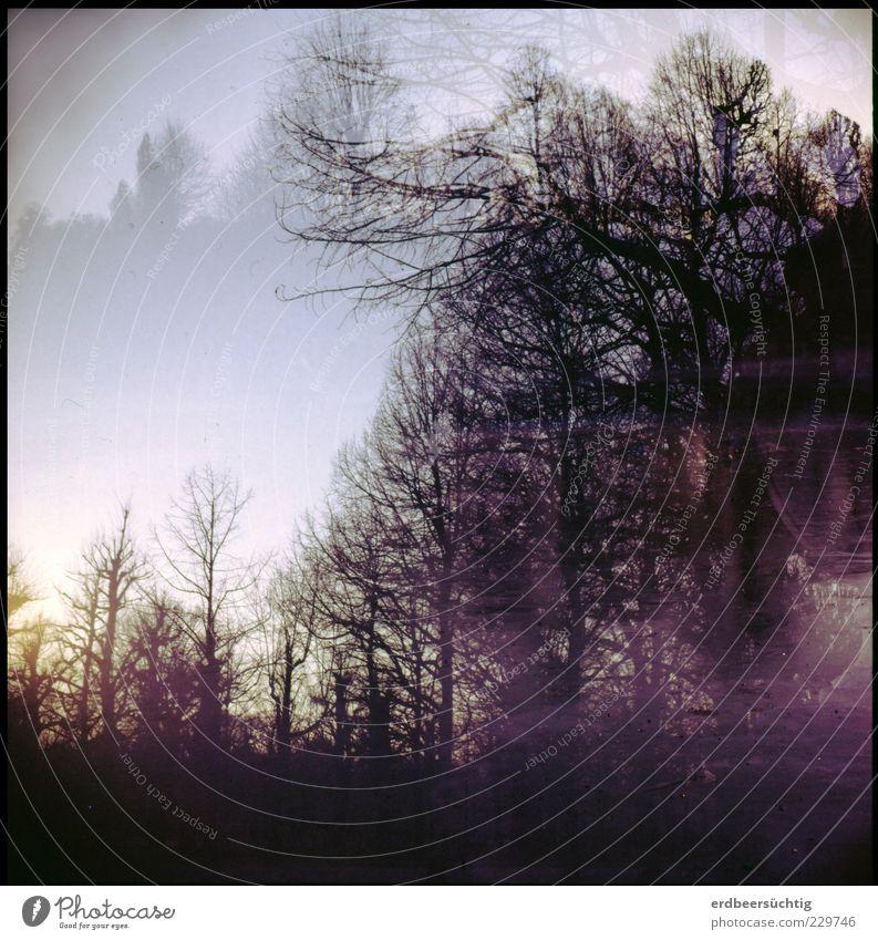 Frostig Natur Himmel Winter Eis Baum Sträucher kalt bizarr Stimmung Jahreszeiten Doppelbelichtung See gefroren Gedeckte Farben Außenaufnahme Experiment