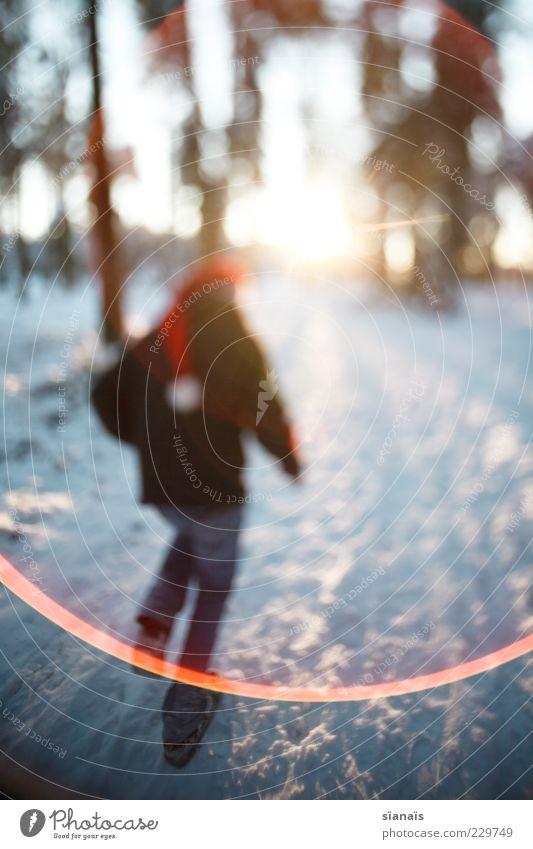 los! Mann Natur Weihnachten & Advent Baum Winter Erwachsene Wald kalt Schnee Landschaft Wege & Pfade Rücken laufen rennen Perspektive Weihnachtsmann