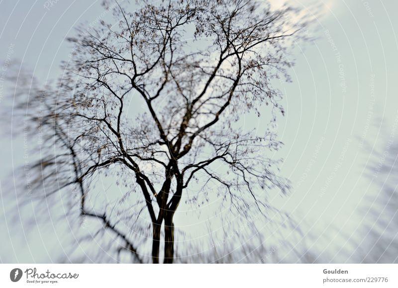 Baumausschlag harmonisch Umwelt Pflanze Himmel Wachstum trist ruhig kalt Vergänglichkeit Gedeckte Farben Außenaufnahme Textfreiraum rechts Tag Kontrast
