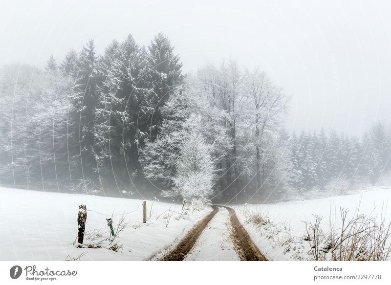 Doch noch? Landschaft Winter schlechtes Wetter Nebel Schnee Baum Sträucher Tanne Buche Feld Wald Wege & Pfade Zaun wandern kalt braun grau weiß Stimmung Umwelt