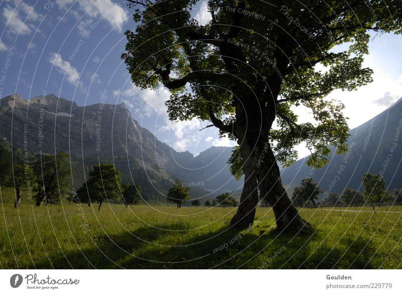Bergluft 2.0 Natur Baum Sonne Sommer Wolken ruhig Erholung Wiese Leben Umwelt Landschaft Berge u. Gebirge Luft Gesundheit Alpen Idylle