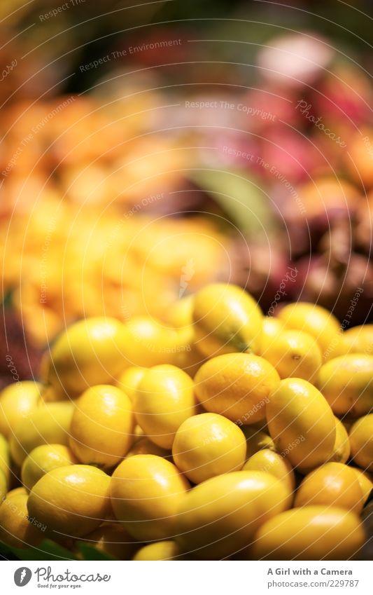 zitrig gelb Gesundheit liegen außergewöhnlich Frucht glänzend Lebensmittel Ernährung Bioprodukte Markt exotisch Vitamin saftig Zitrone Vegetarische Ernährung