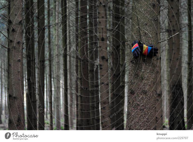 Tristesse Natur blau Baum rot Pflanze Winter Einsamkeit Wald gelb Umwelt Bekleidung trist Streifen Baumstamm hängen verloren