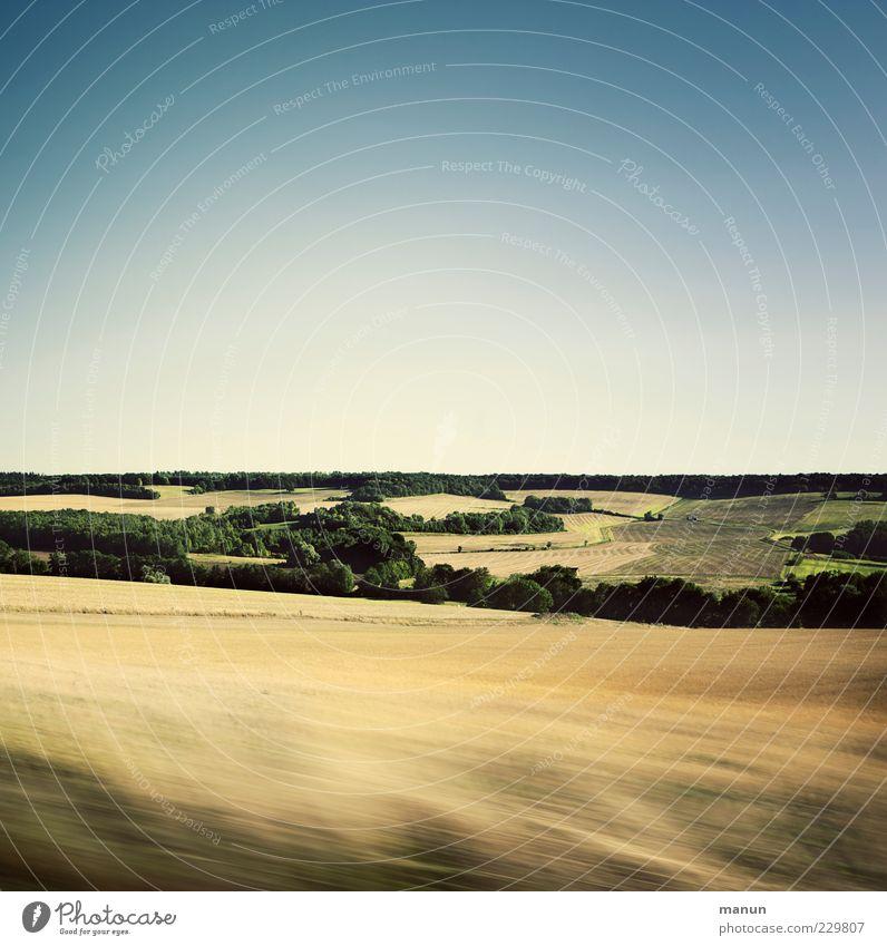 Vorbeifahr'n Natur Landschaft Himmel Sommer Schönes Wetter Nutzpflanze Weizenfeld sommerlich Sommertag Feld Wald Hügel authentisch einfach natürlich schön