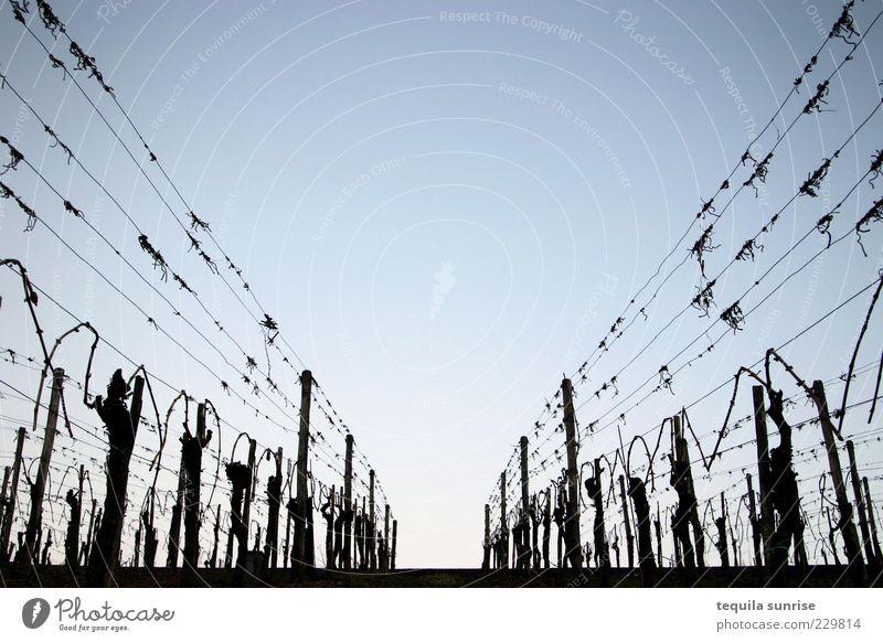 Weinstraße Himmel blau Pflanze ruhig Umwelt Wege & Pfade Ordnung leer Wein Schönes Wetter Ernte bizarr parallel Draht kahl Durchblick