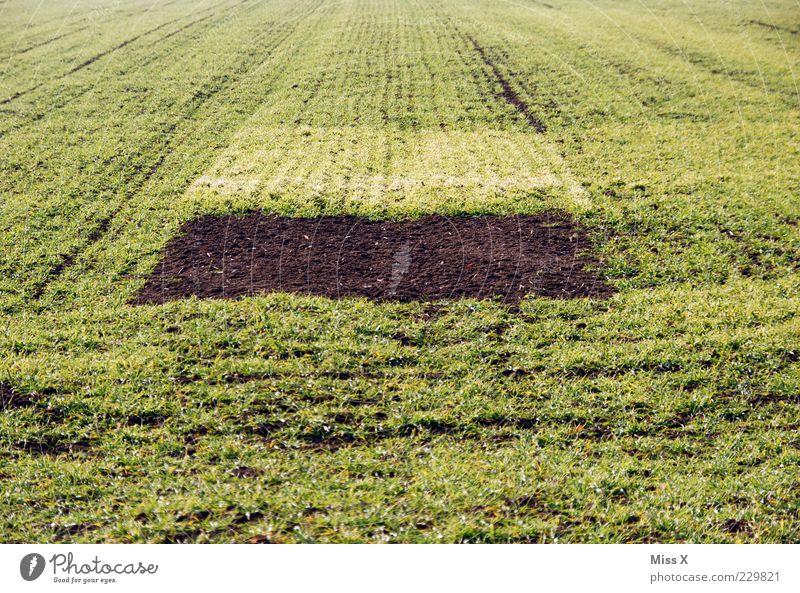 U f o - Parkplatz grün Pflanze Winter Wiese Gras Frühling braun Feld Erde Wachstum Landwirtschaft Loch eckig sprießen säen Feldrand