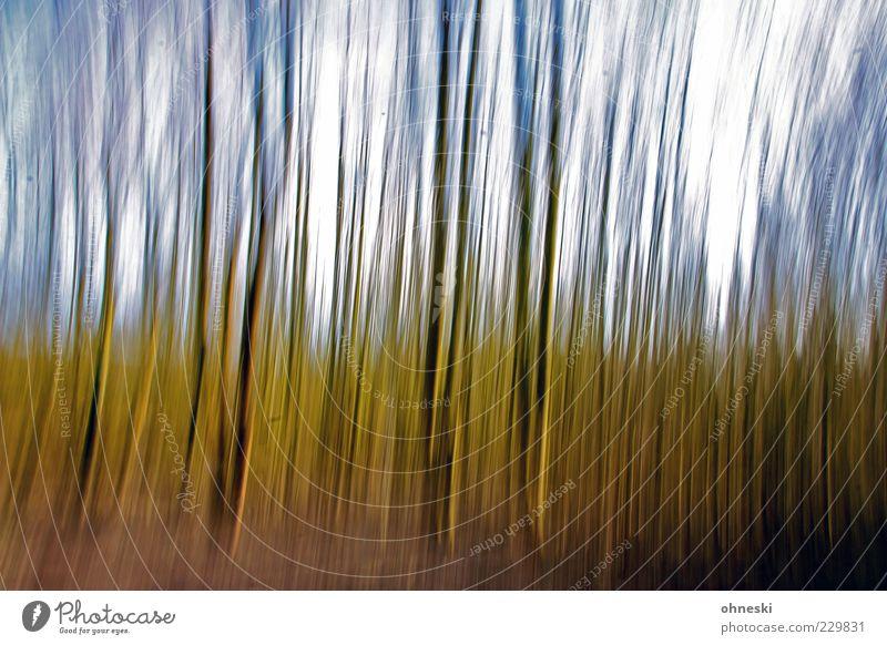 Wald Himmel Natur grün Baum Wald Umwelt skurril Baumstamm gestreift Pflanze malerisch
