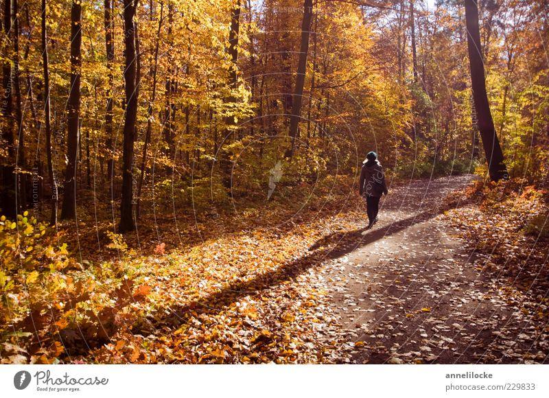 Herbstspaziergang Mensch Frau Natur Erwachsene Wald gelb Erholung Umwelt Herbst Landschaft Wege & Pfade Wetter gold gehen Freizeit & Hobby laufen