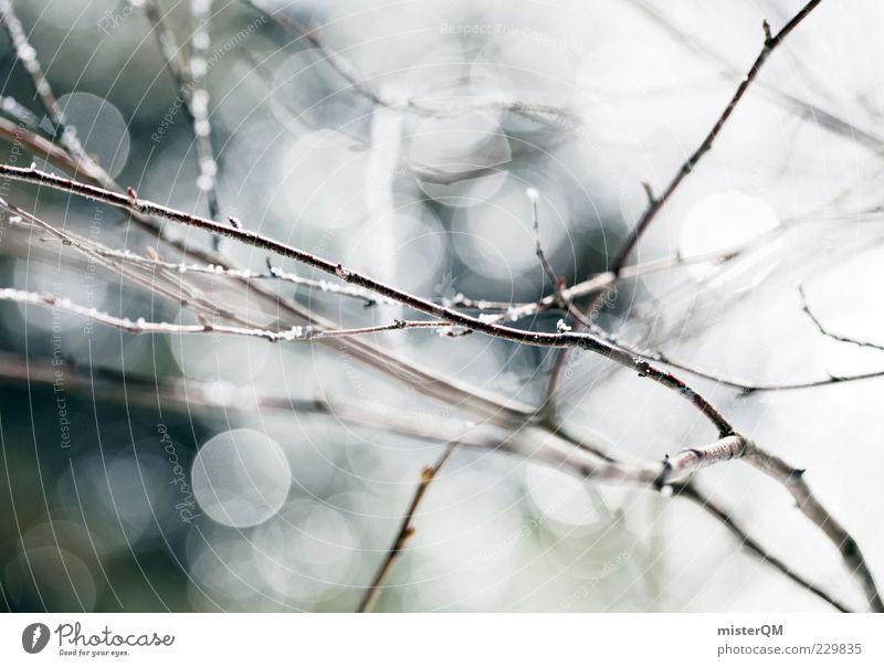 Spring. Natur Pflanze Winter ruhig Umwelt Frühling Hintergrundbild nass ästhetisch Wachstum dünn Schönes Wetter Tau harmonisch Blendeneffekt Geäst