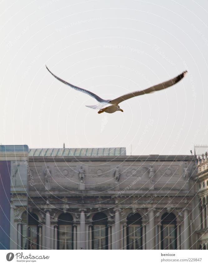 birdy Vogel Möwe fliegen Vogelflug Venedig Italien Markusplatz Flügel Aussicht Suche Blick Wind Kraft Bogen Sehenswürdigkeit Textfreiraum oben Tierporträt