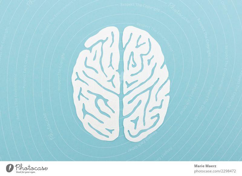 Gehirn-Silhouette als Papierschnitt blau weiß Kopf Denken ästhetisch Kreativität lernen rund Neugier Information Bildung Netzwerk Wissenschaften Inspiration