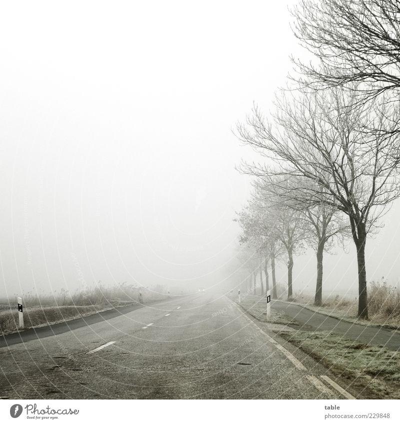 away . . . Winter Umwelt Landschaft Himmel Wolken schlechtes Wetter Eis Frost Baum Straße Linie kalt grau grün schwarz ruhig Heimweh Fernweh Einsamkeit