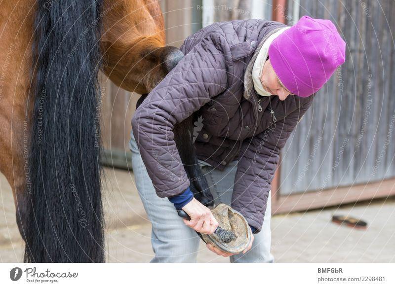 Arbeit am Pferd Frau Mensch Tier Erwachsene Leben Lifestyle Sport Glück Arbeit & Erwerbstätigkeit Freizeit & Hobby Kraft authentisch Reinigen Sicherheit stoppen