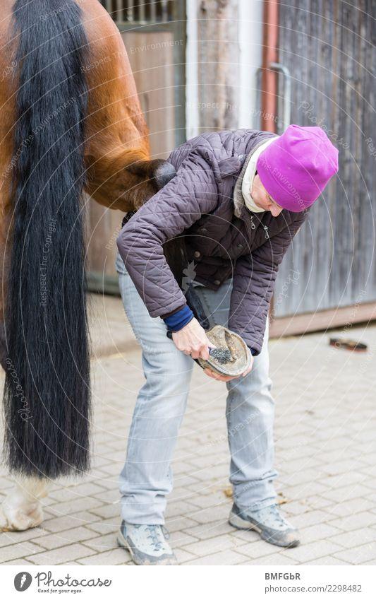 Pferdehufe auskratzen Frau Mensch Tier ruhig Erwachsene Lifestyle Sport Arbeit & Erwerbstätigkeit Freizeit & Hobby Zufriedenheit gefährlich Reinigen Sauberkeit