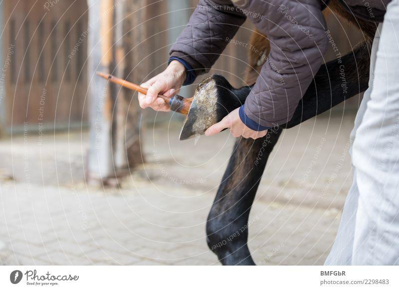Hufe einfetten Frau Mensch Tier Erwachsene Lifestyle Sport Freizeit & Hobby authentisch Beruf Pferd Haustier Säugetier Barfuß Pinsel Nutztier Tierliebe