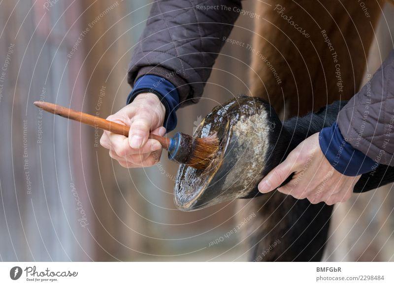 Pferdepflege - Huf pflegen Frau Mensch Tier Erwachsene Lifestyle Gesundheit Sport Gesundheitswesen Freizeit & Hobby authentisch Haustier Barfuß Horn Pinsel Fett