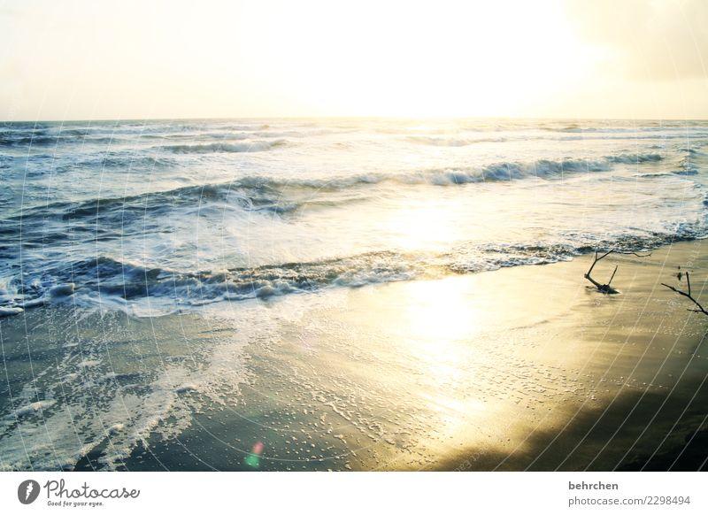 schwungvoll | aber ganz sanft Himmel Natur Ferien & Urlaub & Reisen schön Wasser Landschaft Sonne Meer Ferne Strand Küste Tourismus Freiheit Ausflug Horizont
