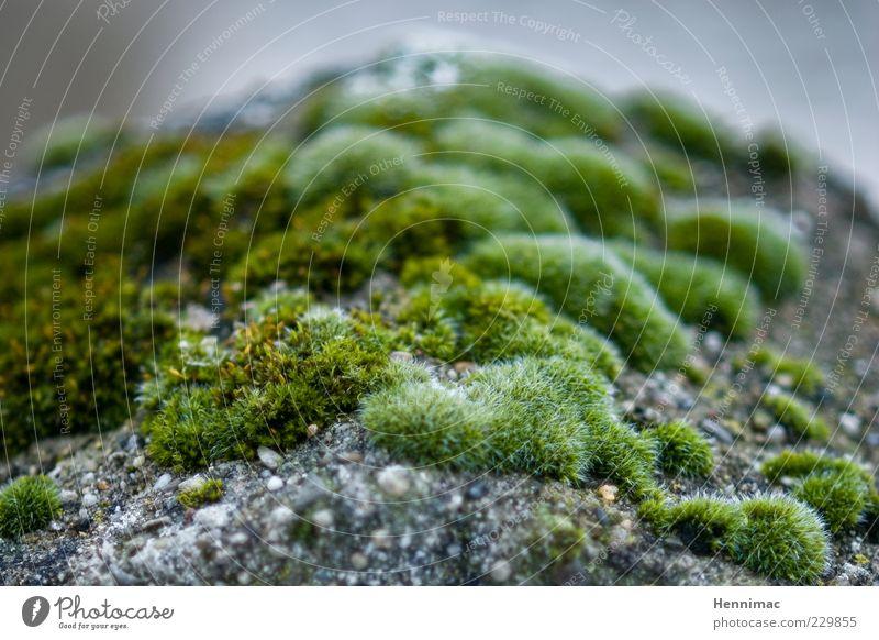 Mikrobenland. Natur grün Pflanze Leben grau Stein Felsen natürlich weich Hügel nah Lebewesen Duft Moos bedeckt Grünpflanze