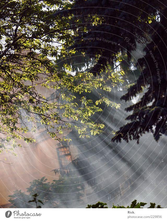 .Nebelschwaden Haus Umwelt Natur Pflanze Urelemente Luft Wasser Sonne Sonnenlicht Sommer Baum Blatt Wald Menschenleer Einfamilienhaus Mauer Wand hell grün