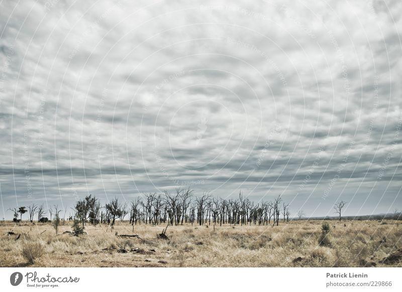 Into the Wild Himmel Natur Pflanze Wolken Einsamkeit Ferne Umwelt Landschaft grau Gras Wärme Luft Wetter Wind Klima trist