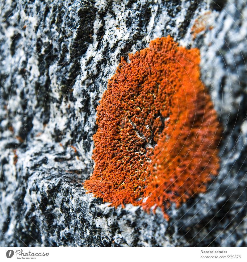 Belebter Granit Natur Pflanze Farbe Leben Stein Hintergrundbild ästhetisch Klima Wachstum beobachten rein entdecken Moos hart bescheiden