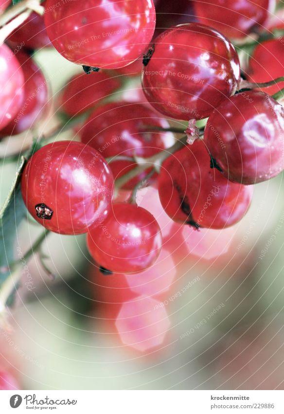 sweet & sour Natur Pflanze rot Garten Frucht glänzend rosa frisch süß Kreis rund Stengel Beeren sauer fruchtig essbar