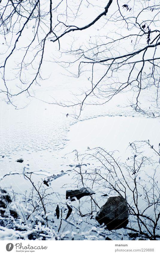 eisige Zeiten Natur Wasser Winter kalt Schnee Stein Eis natürlich Coolness Frost Seeufer stagnierend Geäst filigran Zweige u. Äste laublos