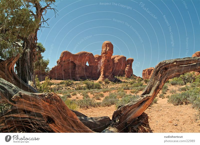 Elefantös Stein Felsen USA Sehenswürdigkeit Nationalpark Attraktion Naturphänomene Utah Ausflugsziel Gesteinsformationen Arches National Park