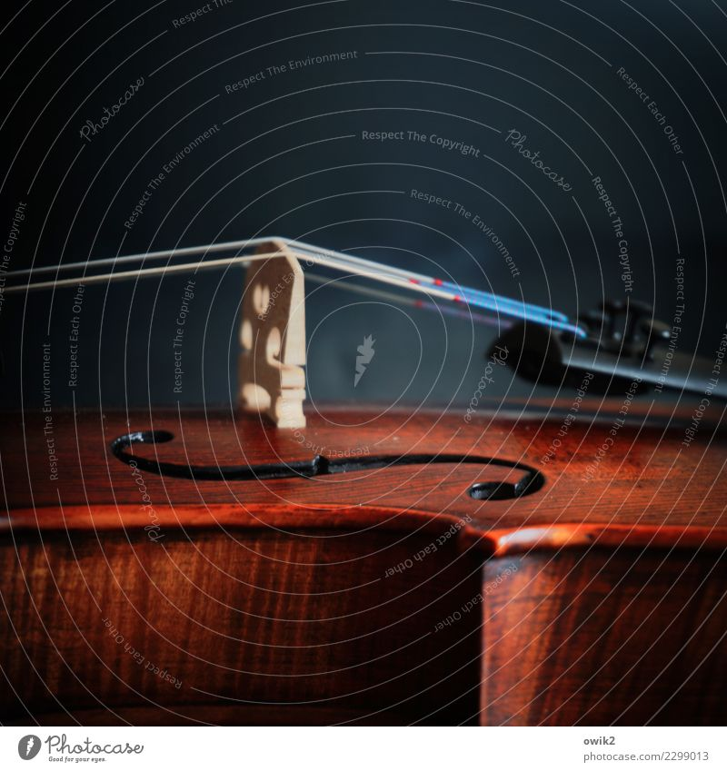 Concerto Musik Geige Holz Metall elegant nah Corpus Saite Streichinstrumente akustisch klassisch Steg Befestigung ruhig Pause Momentaufnahme Farbfoto