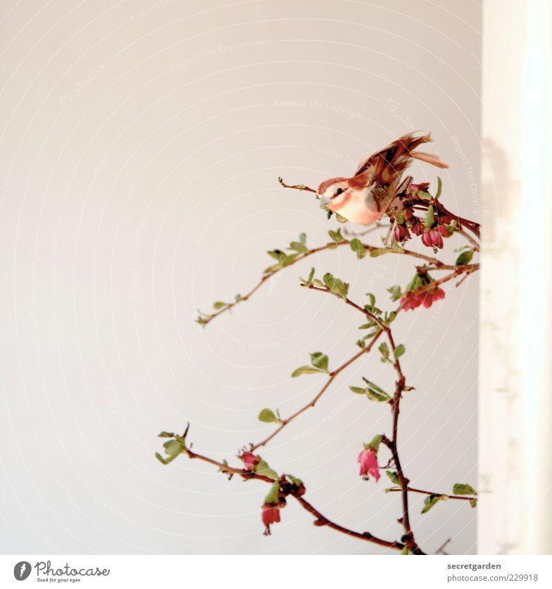 twittern. grün weiß Pflanze rot Wand Blüte Frühling braun Vogel Raum Wohnung ästhetisch Häusliches Leben Dekoration & Verzierung Sträucher einzigartig