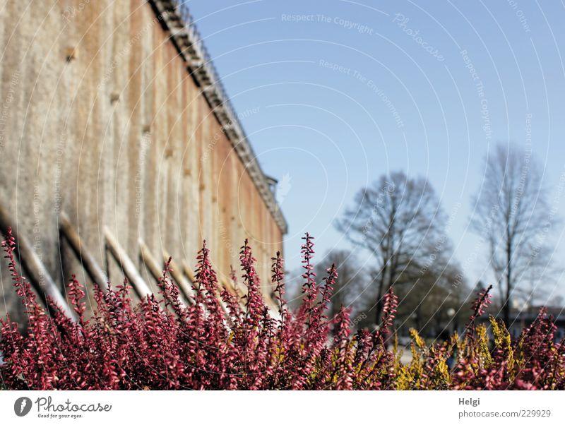 tief durchatmen... Erholung ruhig Duft Umwelt Natur Pflanze Wolkenloser Himmel Frühling Schönes Wetter Baum Blüte Heidekrautgewächse Menschenleer Bauwerk