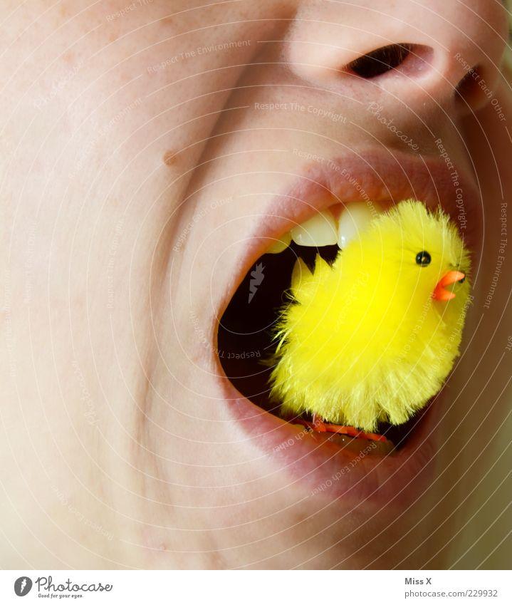 Ein fröhliches Osterbild Mund Lippen Zähne Tierjunges Fressen gruselig kuschlig klein lustig gelb bizarr Appetit & Hunger Küken Farbfoto mehrfarbig Nahaufnahme