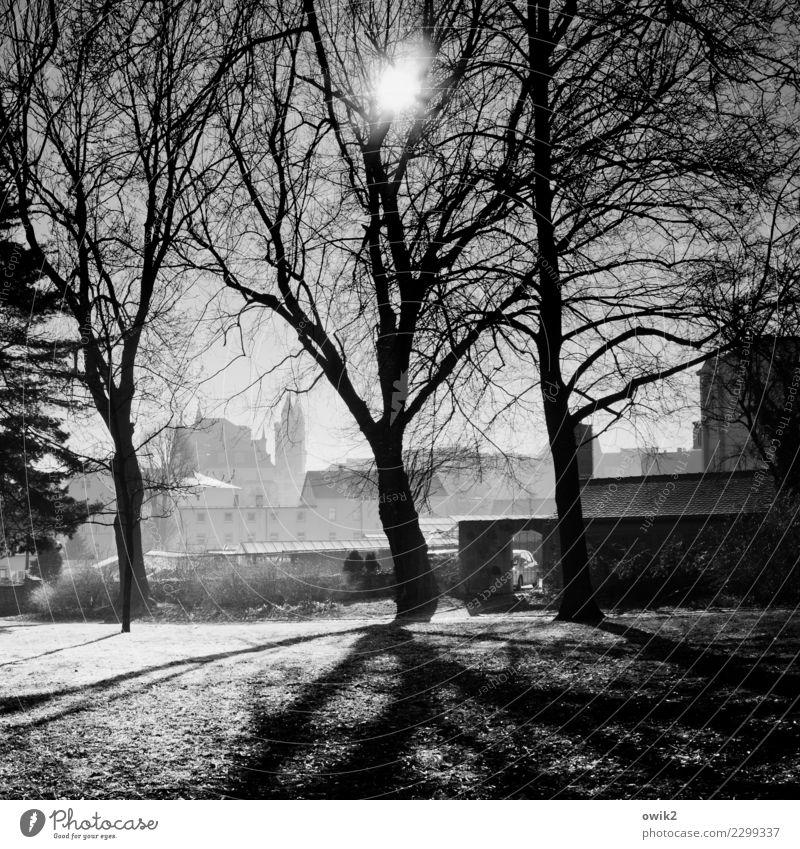 Bautzen, Am Stadtwall Natur alt Pflanze Landschaft Baum Haus ruhig Frühling Holz Gras Gebäude Deutschland Stein leuchten Park Idylle